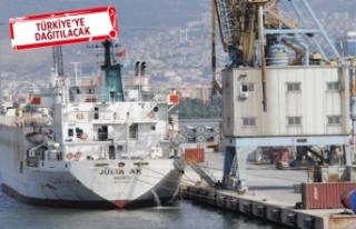 İzmir'e gemi ile 5 bin 391 angus getirildi!