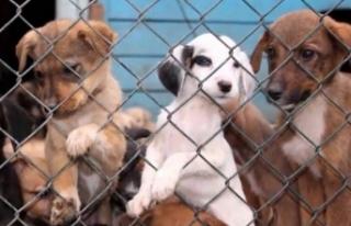 İzmir Barosu'ndan hayvan hakları çıkışı