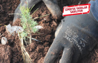 İzmir'de orman yangınlarının yaraları sarılıyor