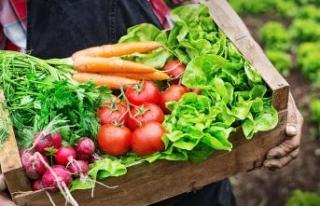 Avrupa'da organik pazarına Türk damgası