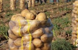 Patateste gümrük vergisi sıfırlandı!