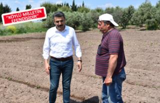 Başkan Kırgöz tarlaya girdi üreticinin derdini...