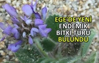 Ege'de yeni endemik bitki türü bulundu