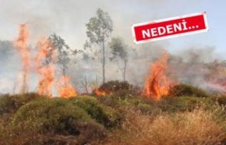 İzmir'de yangın! Yerleşim yerlerini tehdit...
