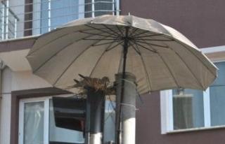 İzmir'de kumruya şemsiyeli koruma