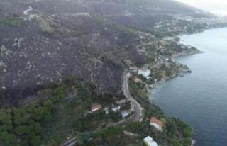 Marmara Adası'ndaki orman yangınında 80 hektar...