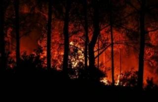 Meteoroloji bu kez orman yangınına karşı uyardı!