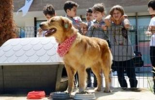 Örnek proje: Her okula bir sokak köpeği