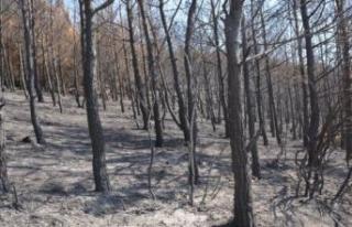 Tarihi Yarımada'da yanan saha ağaçlandırılacak