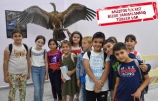Tabiat Müzesi, 10 binden fazla obje ile öğretiyor