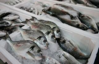 Türkiye'nin su ürünleri ihracatı levrek ve...