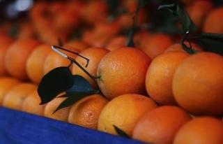 Aşırı tüketilen C vitamini mesaneye zarar veriyor!