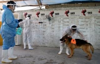 İran'da köpekler Kovid-19'u teşhis etmek...