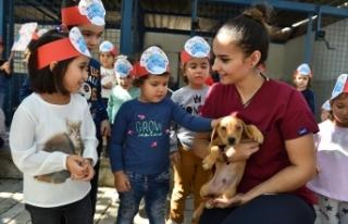 Büyükşehir'den bin 500 köpeğe rehabilitasyon...