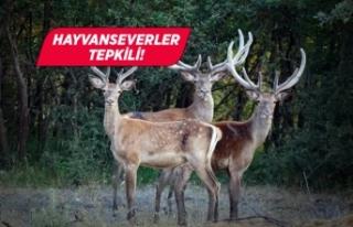 Eskişehir'de 18 geyik ihale ile vurulacak!