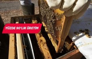 İzmir'in 'Efe' arısından hasat başladı