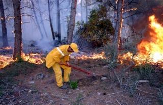 Yılın İlk Orman Yangını