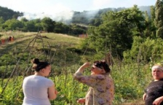 3 Hektarlık Alan Kül Oldu