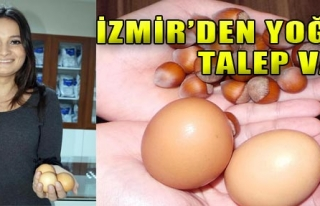 Köy Yumurtasına Yoğun Talep