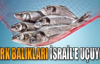 Türk Gıda İhracatçılarından İsrail Çıkartması
