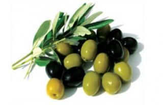 Olivetech 2012 Açıldı