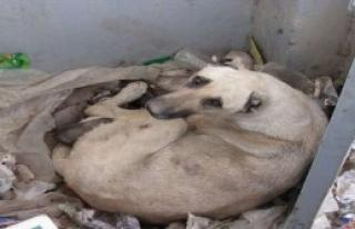 5 Yavru Köpek Soğuktan Öldü