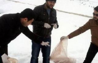 Kayseri'de Yaban Hayvanları İçin Doğaya Yem