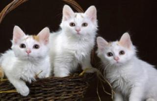 Kediler İnsanları Ne Olarak Görüyor?