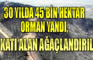 30 yılda 45 bin hektar orman yandı, 3 katı alan...