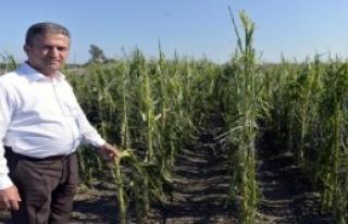 Adana'da Üreticiyi Dolu Vurdu
