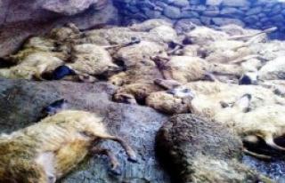 Sokak Köpekleri 91 Küçükbaş Hayvanı Telef Etti