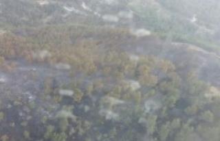 7 Hektarlık Orman Yandı