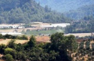 150 Hektarlık Ormanlık Alan Yandı