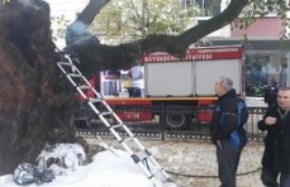 Asırlık Çınar Ağacındaki Yangın Söndürüldü