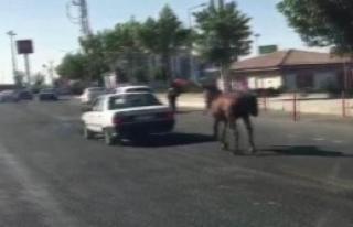 Atı Otomobilin Arkasına Bağladı