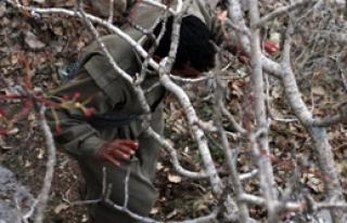 Sadece Bingöl'de 1 Yılda 55 PKK'lı!