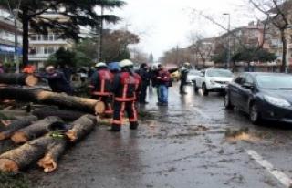 Bağdat Caddesi'nde Ağaç Yol Ortasına Devrildi
