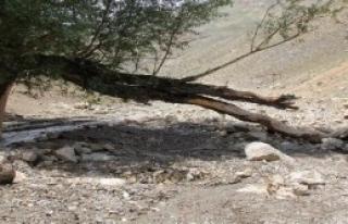 Başkale'de Aşırı Yağışlar Sele Neden Oldu