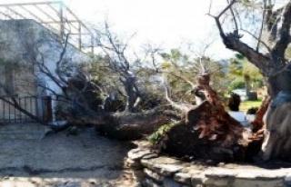 Bodrum'da Fırtına Kabusu
