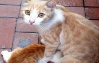Yavru Kediler Reklam Panosundan Kurtarıldı