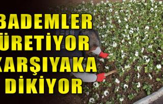 Karşıyaka 150 Bin Çiçekle Süsleniyor