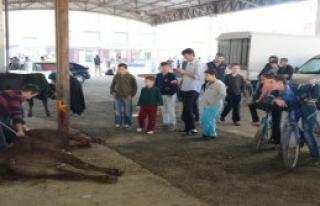 Çocuklar Kurban Kesimlerini İzledi
