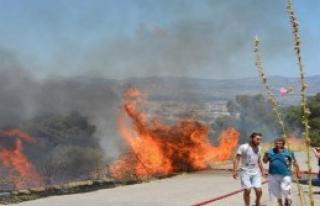 Dikili'de Korkutan Yangın