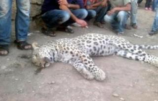 Leoparı Öldürenlere 5 Yıl Hapis