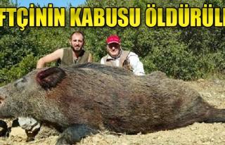 Çiftçinin Kabusu Olan Domuz Öldürüldü