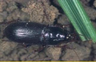 Ekin Düşmanı Böcek Uyarısı