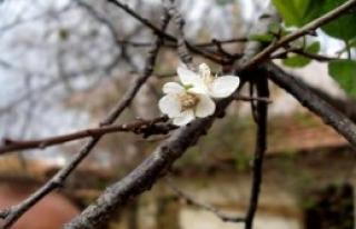 Kasımda Çiçek Açıp, Meyve Verdi