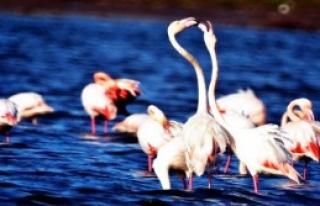 Flamingolardan Özel Görüntüler