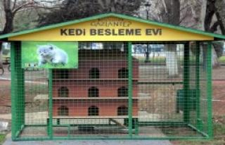 Gaziantep'te Sokak Kedilerine Barınak