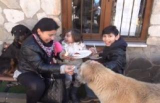 Hayvan Barınağında Sevgi Günü Kermesi